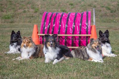 shelties1 2 400